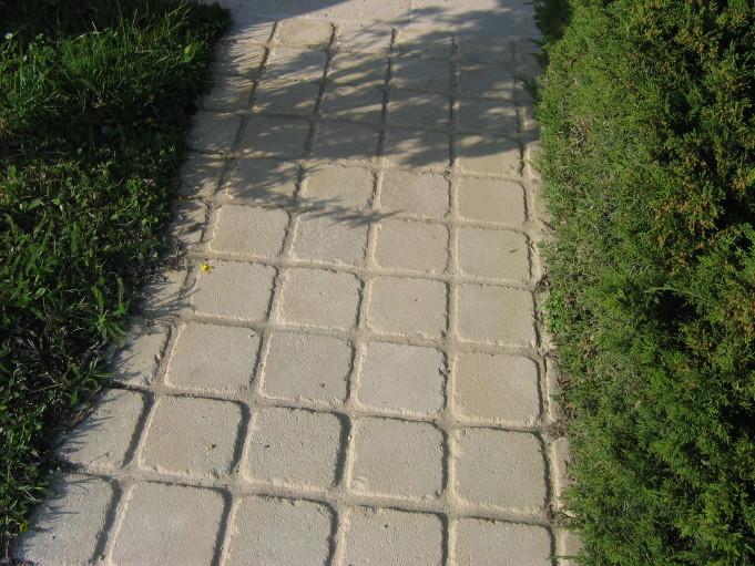 Chemin pavé avec joints dans un jardin